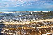Heron sea bird flying over Beach with waves at dramatic dawn – South Carolina, USA