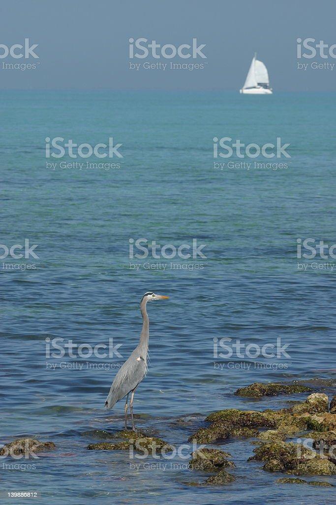 Heron Watching a Sailboat royalty-free stock photo