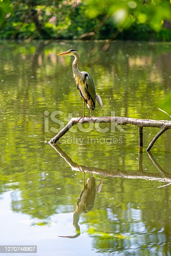 A view of a Heron with reflection