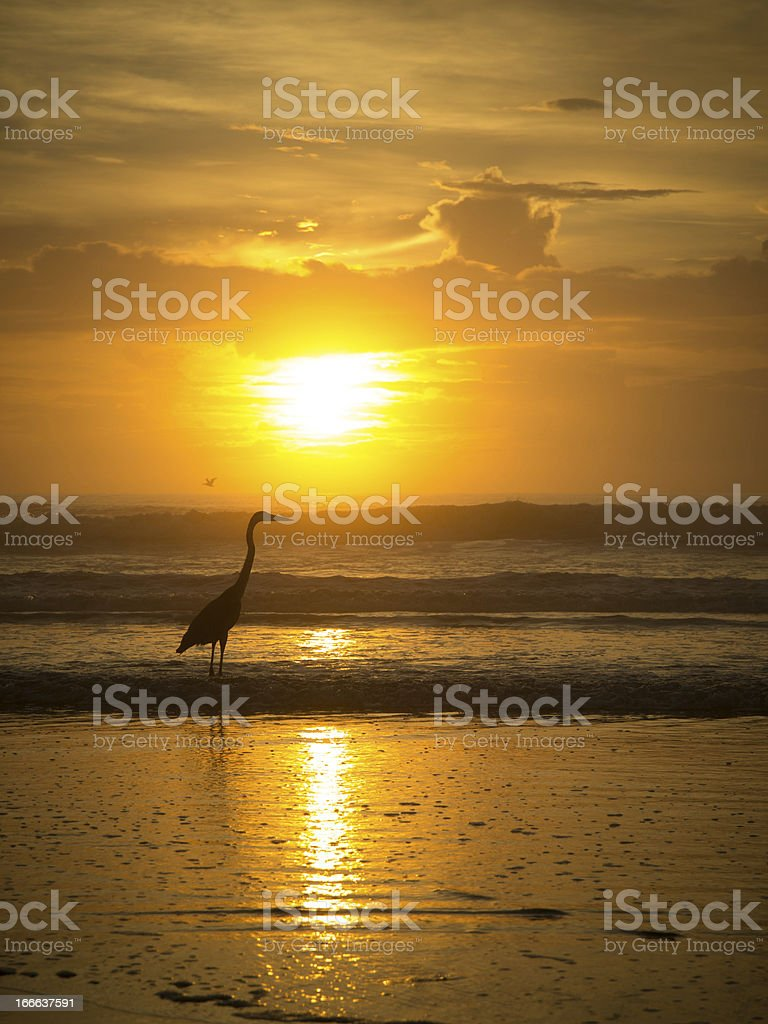 Heron's Golden Dawn royalty-free stock photo