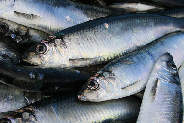 hering - herring stock photos and pictures