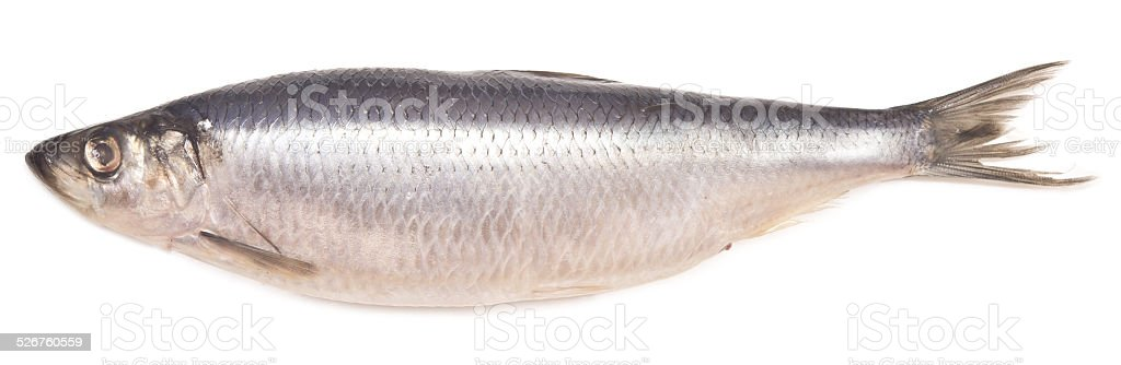 herring stock photo