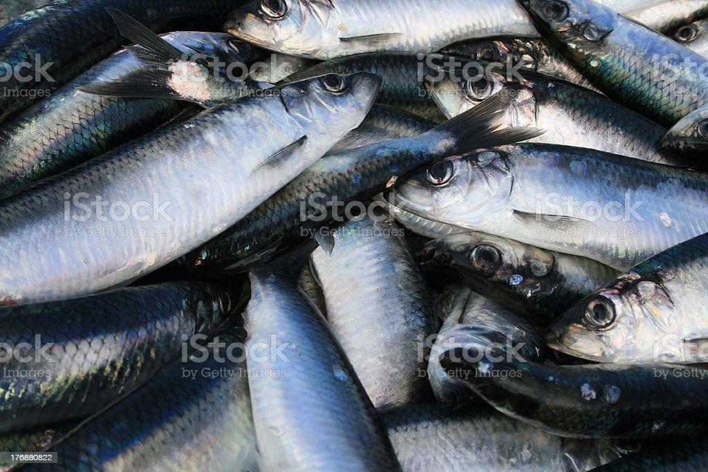herrings – Foto