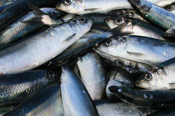 herrings - herring stock photos and pictures