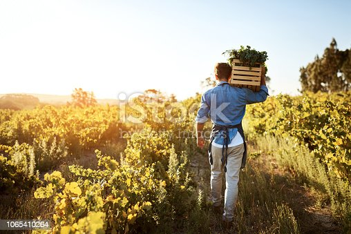 Rearview shot of a young man holding a crate full of freshly picked produce on a farm