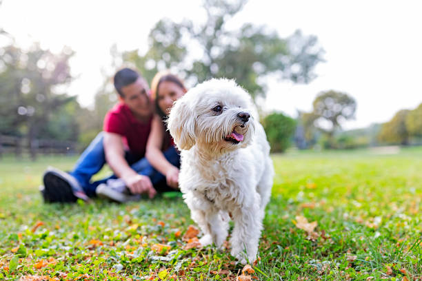 He's more than a pet. He's family stock photo
