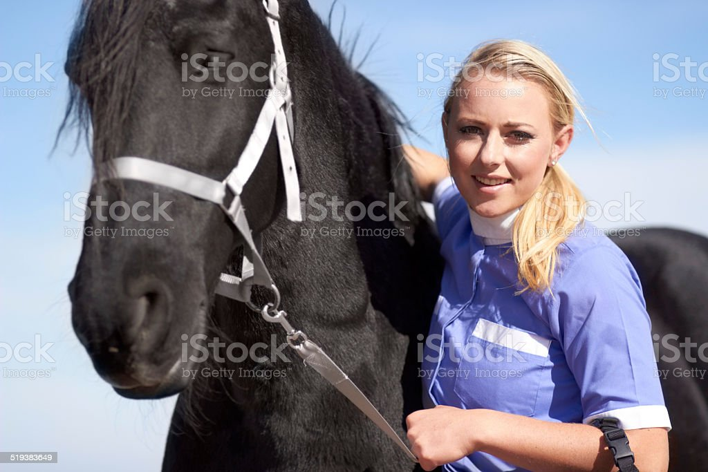 He's our number one show horse! stock photo