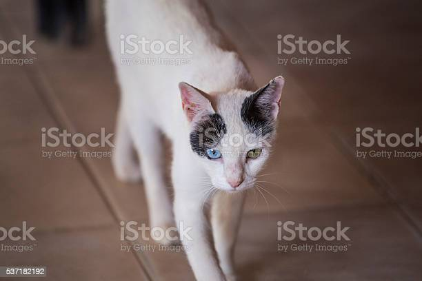 Heterochromia black white cat picture id537182192?b=1&k=6&m=537182192&s=612x612&h=fbrgt1vq ebs16wive79nlbcdwoxzzu b0stnbscenq=