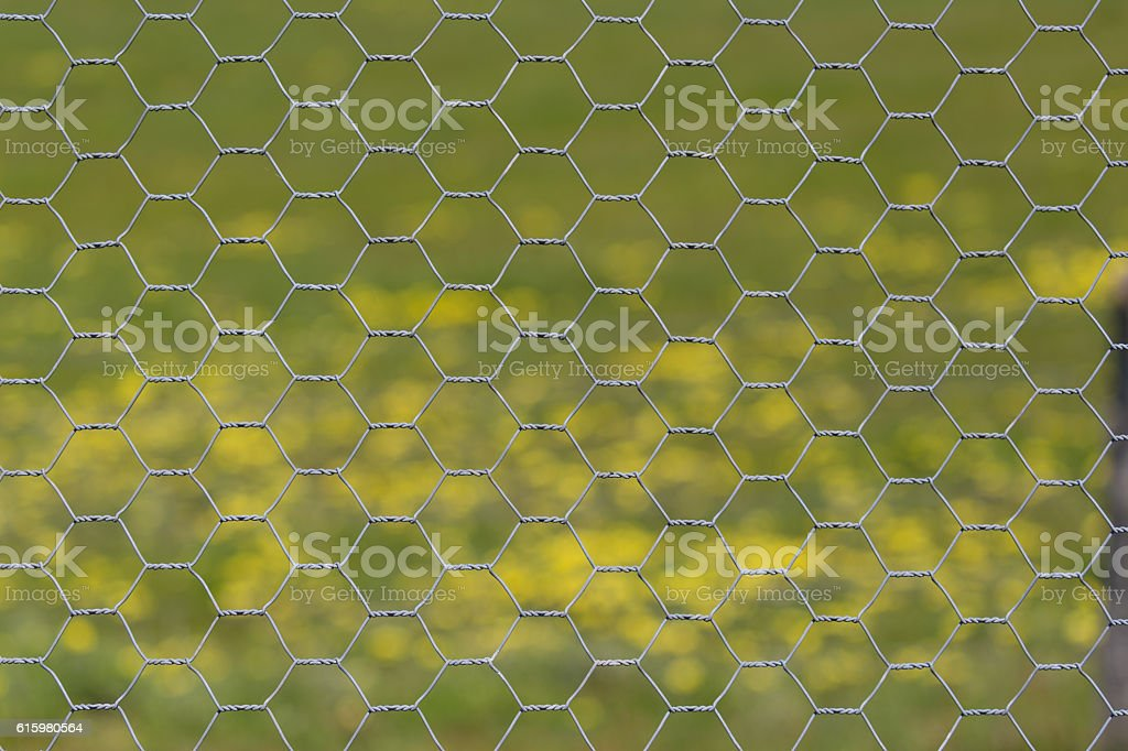 Hexagonal Chicken Wire fence pattern with spring flowers stock photo