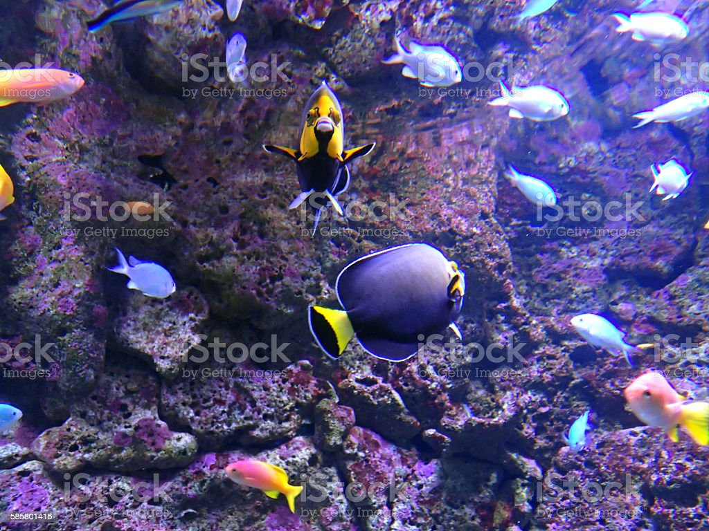 Hey fellas someone is watching us Tropical fish photo. Fish Stock Photo