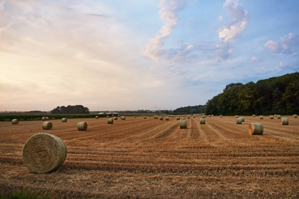 Hey stack on the farm field in Belgium, stock photo