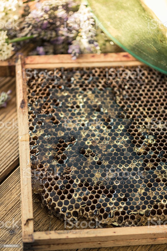 hhoneycomb frame with honey royalty-free stock photo