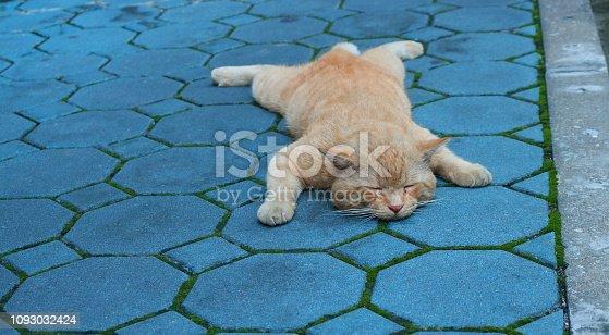 istock hi, my name is copycat, i love to sleep like a dog 1093032424