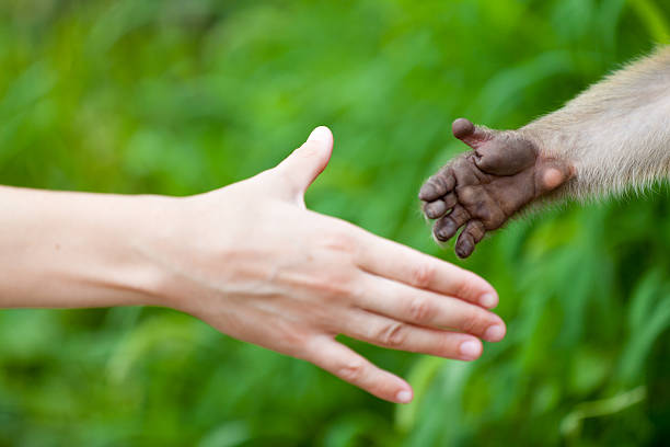 Hi nature Two hands open towards each other. animal hand stock pictures, royalty-free photos & images