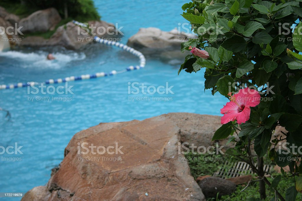 Hibiscus and pool royalty-free stock photo