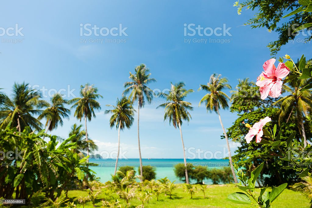 hibiscus by sea royalty-free stock photo