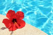 ハイビスカスの花とプール