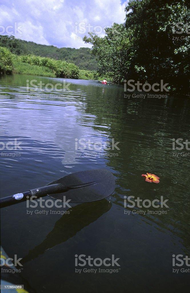 Hibiscus flower in Wailua River with kayak, Kauai, Hawaii stock photo
