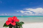 ハイビスカスの花と青い海