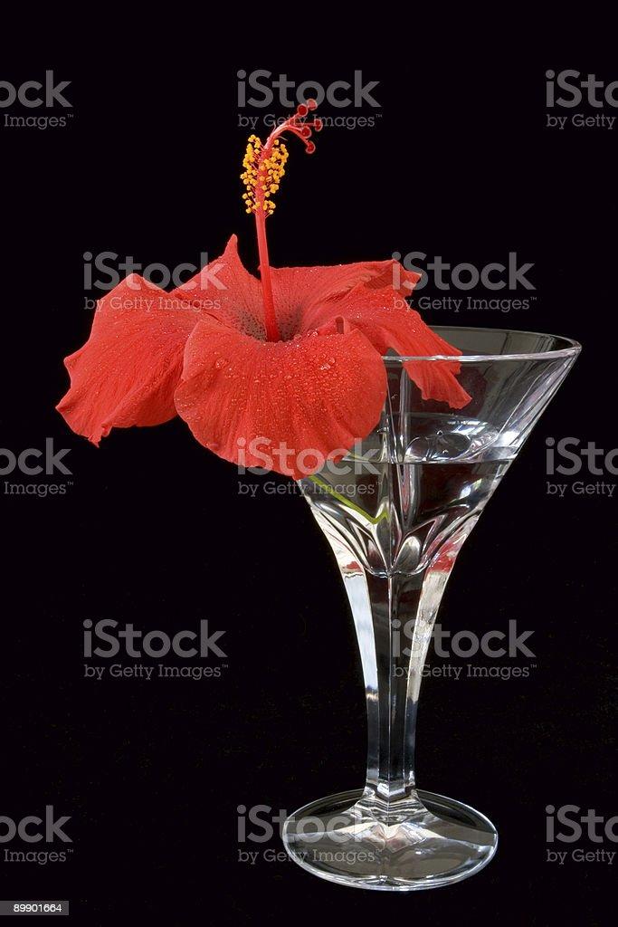 Hibiskus-Martini Lizenzfreies stock-foto