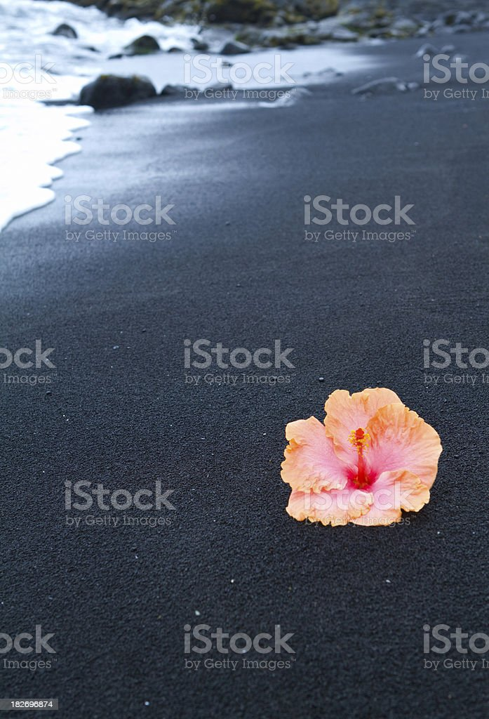 Hibiscus on a black sand beach, Hawaii royalty-free stock photo