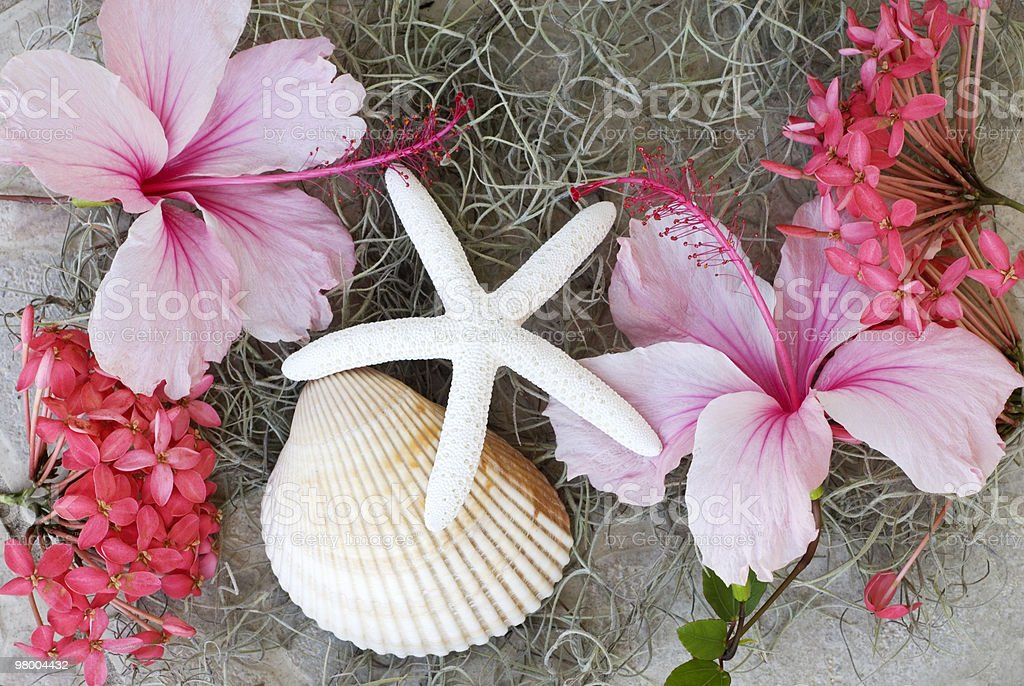 Hibiscus Starfish and Seashell on Moss Background royalty-free stock photo
