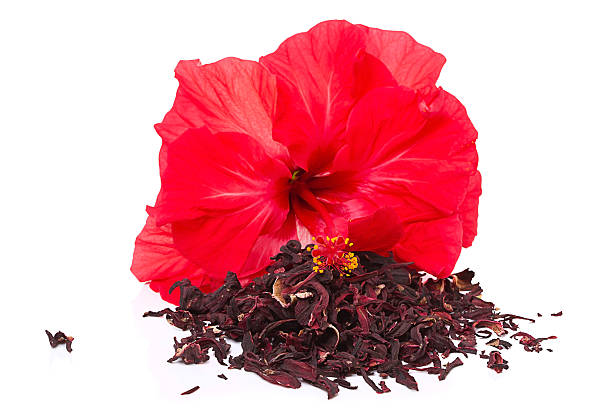 Hibiscus tea and flower picture id134968596?b=1&k=6&m=134968596&s=612x612&w=0&h=srkksx2bmgf1p7hca9jsviyyxrbgh893ag5jxdakvrk=