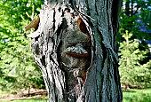 istock Hickory Tree Trunk 1328424277
