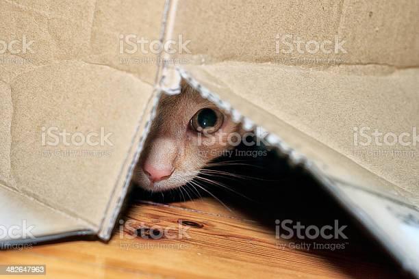 Hidden cat picture id482647963?b=1&k=6&m=482647963&s=612x612&h= kocslmiyvx ai5oozua3f2zjg3pq5ci2xz0wuiwe5g=
