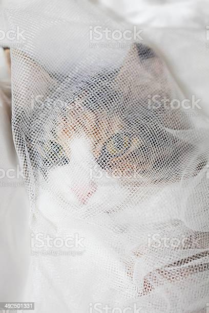 Hidden cat picture id492501331?b=1&k=6&m=492501331&s=612x612&h=dw2wqg0tnpyuxfhu7ocnftz9kqphdhd5hqpp3bgpomc=
