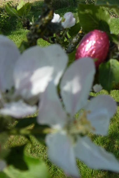 huevo de pascua oculto para la caza de huevos de los niños - lunes de pascua fotografías e imágenes de stock