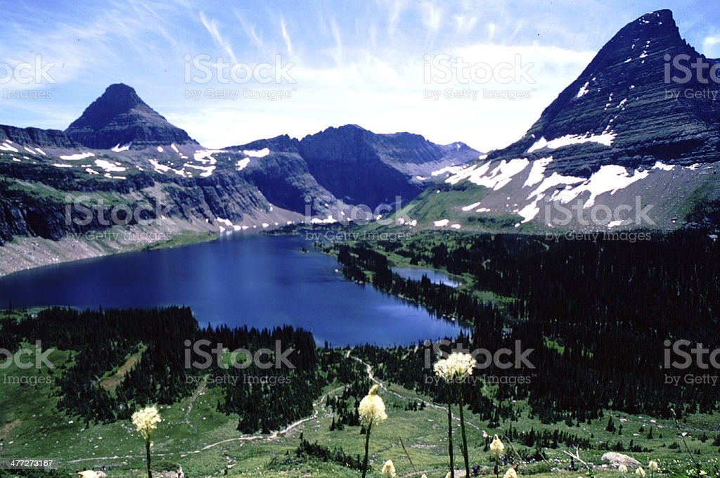 Hidden Lake, Glacier National Park, Beargrass flowers royalty-free stock photo