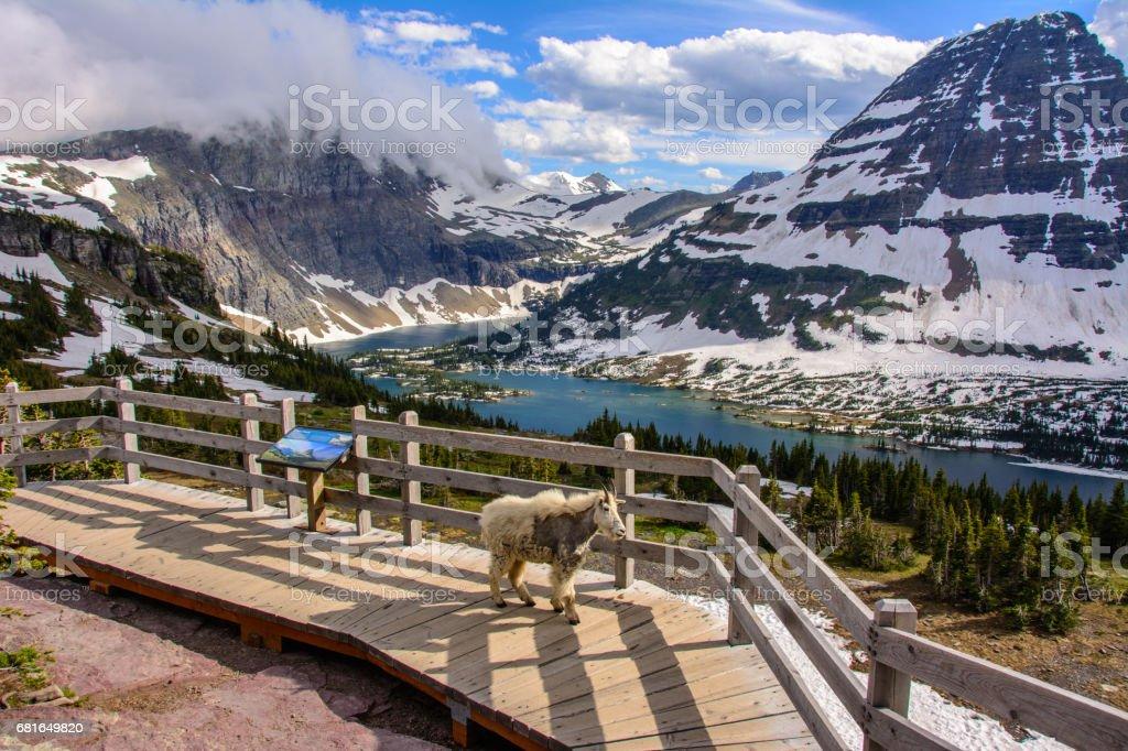 Hidden Lake, Glacier National Park, Montana stock photo