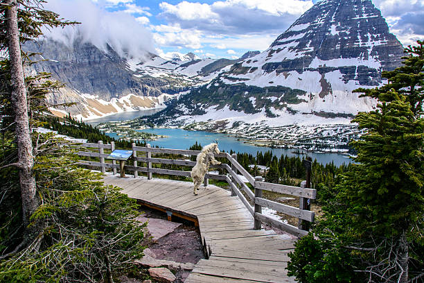 hidden lake in glacier national park, montana - us glacier national park stock pictures, royalty-free photos & images