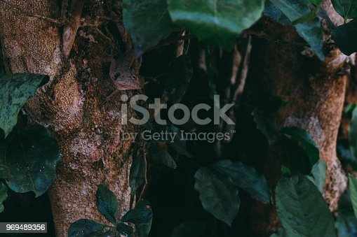 istock Hidden lizard at Angkor in Cambodia 969489356