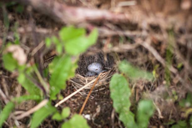 Hidden nest stock photo