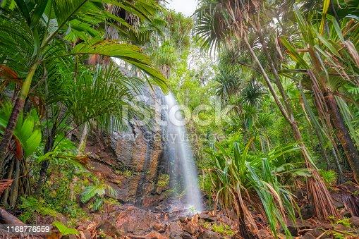 Vallée de Mai Nature Reserve (
