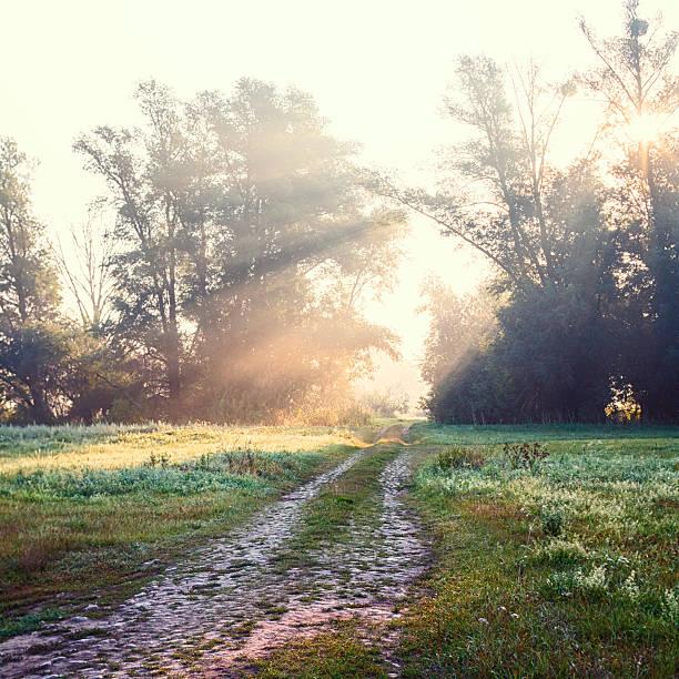 hidden way through green forest in misty morning - baumwipfelpfad stock-fotos und bilder