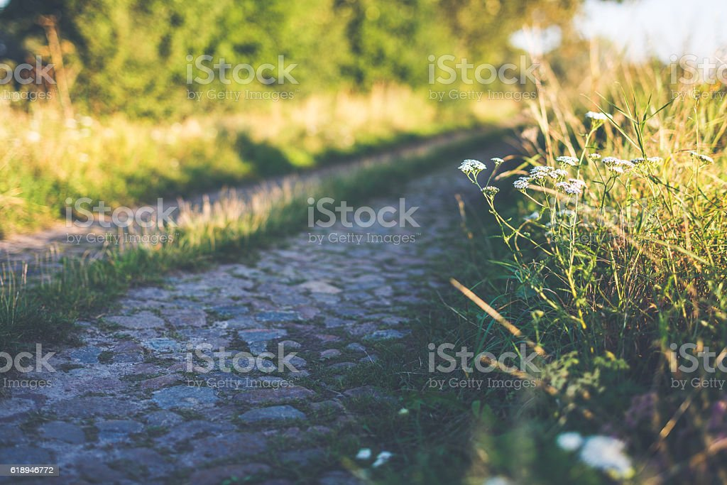 Hidden way through green meadow in summer stock photo