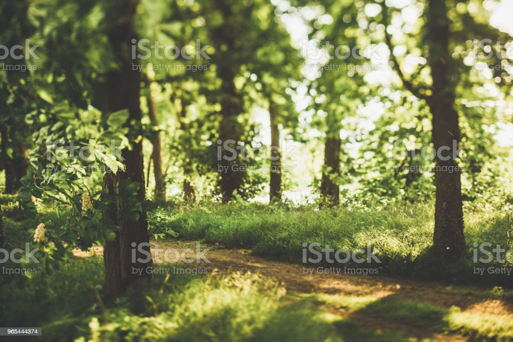 Hidden way through the green forest by the meadow in summer zbiór zdjęć royalty-free