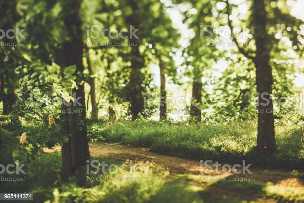 Ukryta Droga Przez Zielony Las Na Łące W Lecie - zdjęcia stockowe i więcej obrazów Baldachim drzew