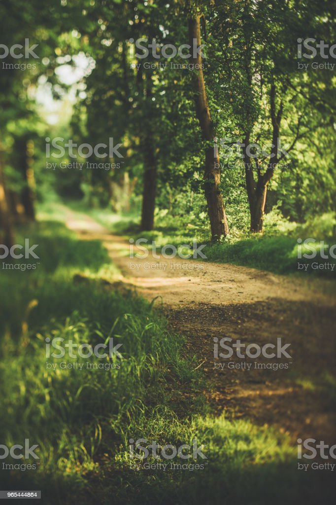 Hidden way through the green forest by the meadow in summer royalty-free stock photo