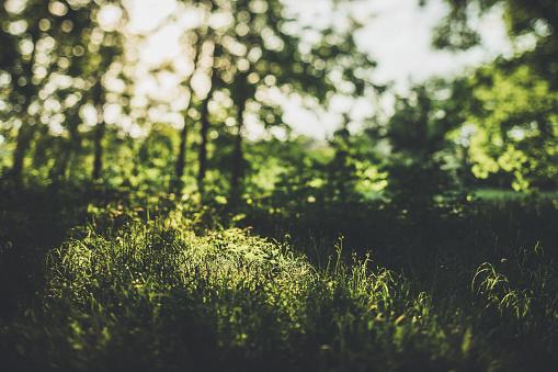 녹색 숲 여름에서 풀밭으로 숨겨진된 길 0명에 대한 스톡 사진 및 기타 이미지