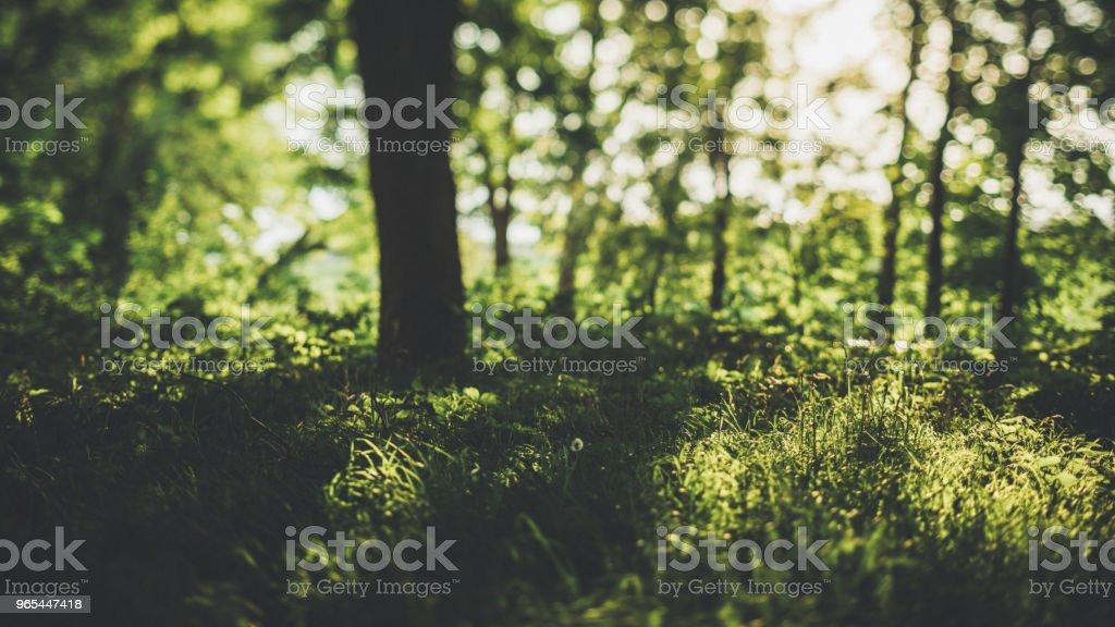 Versteckte Art und Weise durch den grünen Wald von der Wiese im Sommer - Lizenzfrei Ast - Pflanzenbestandteil Stock-Foto