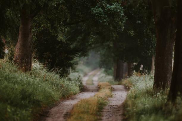 versteckte art und weise durch den grünen wald im sommer - radwege deutschland stock-fotos und bilder