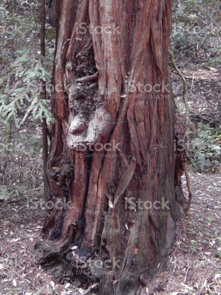 Hidding tree goblin stock photo
