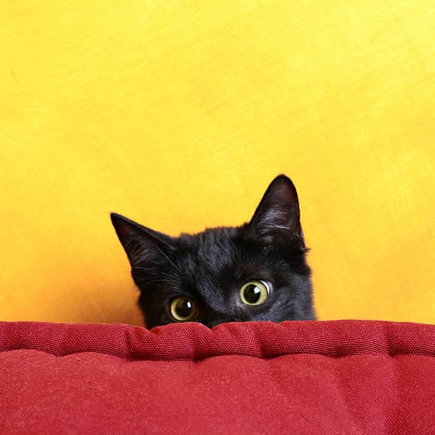 versteckspiel - peeping tom stock-fotos und bilder