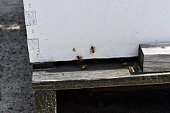 Hide entrance with honey bees