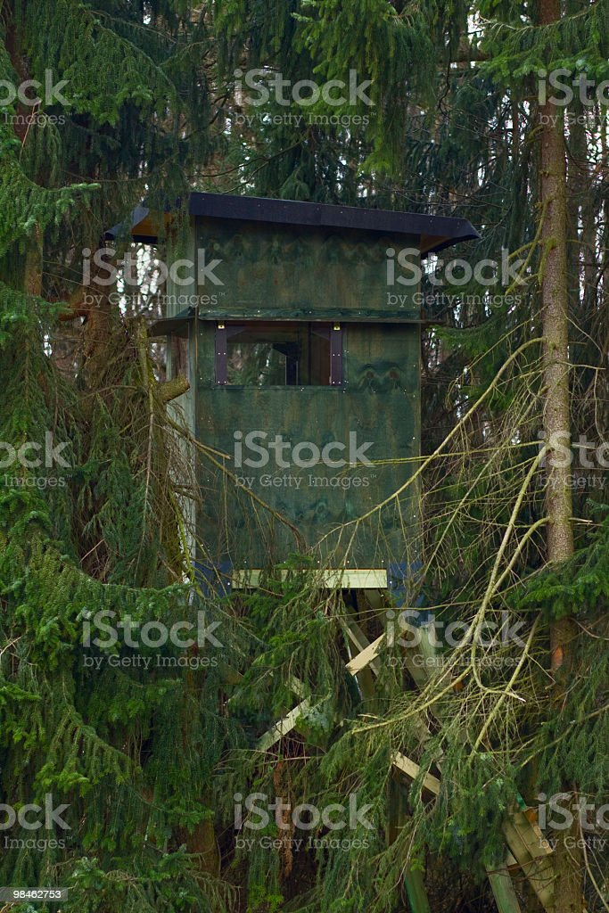 Hide in forest royalty-free stock photo