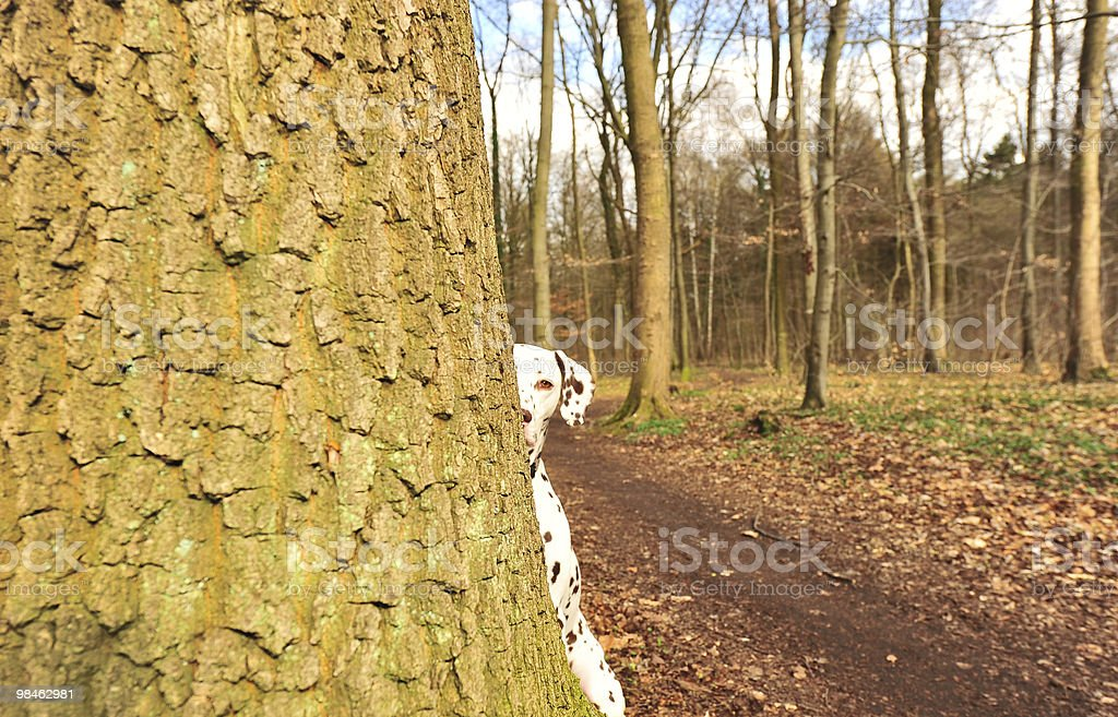 Hide-and-seek royalty-free stock photo